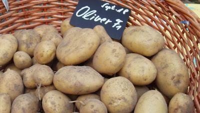 Kartoffelzucht