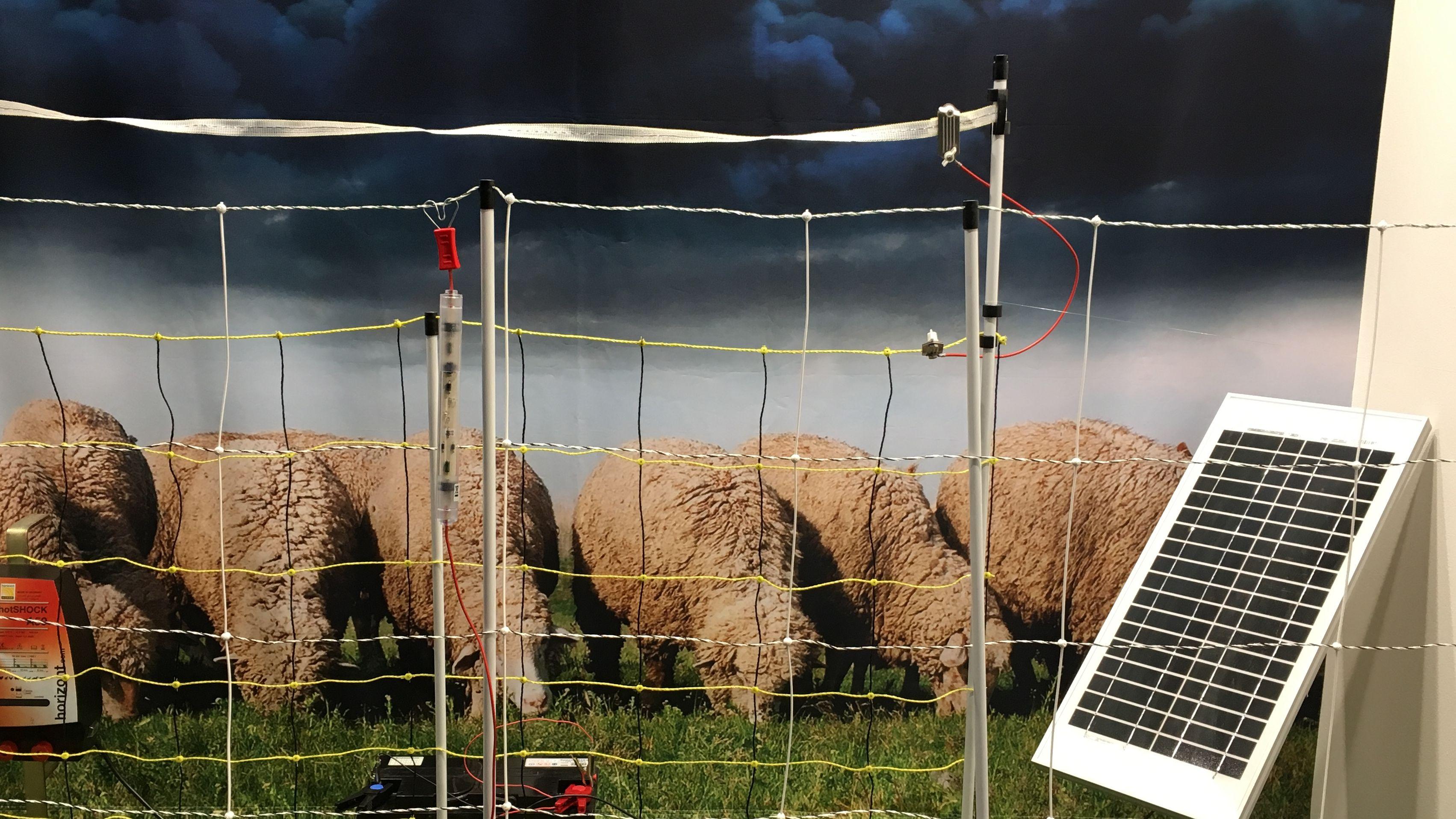 Weidehaltung: Zaunbauer: Keine Lösung für den Wolf