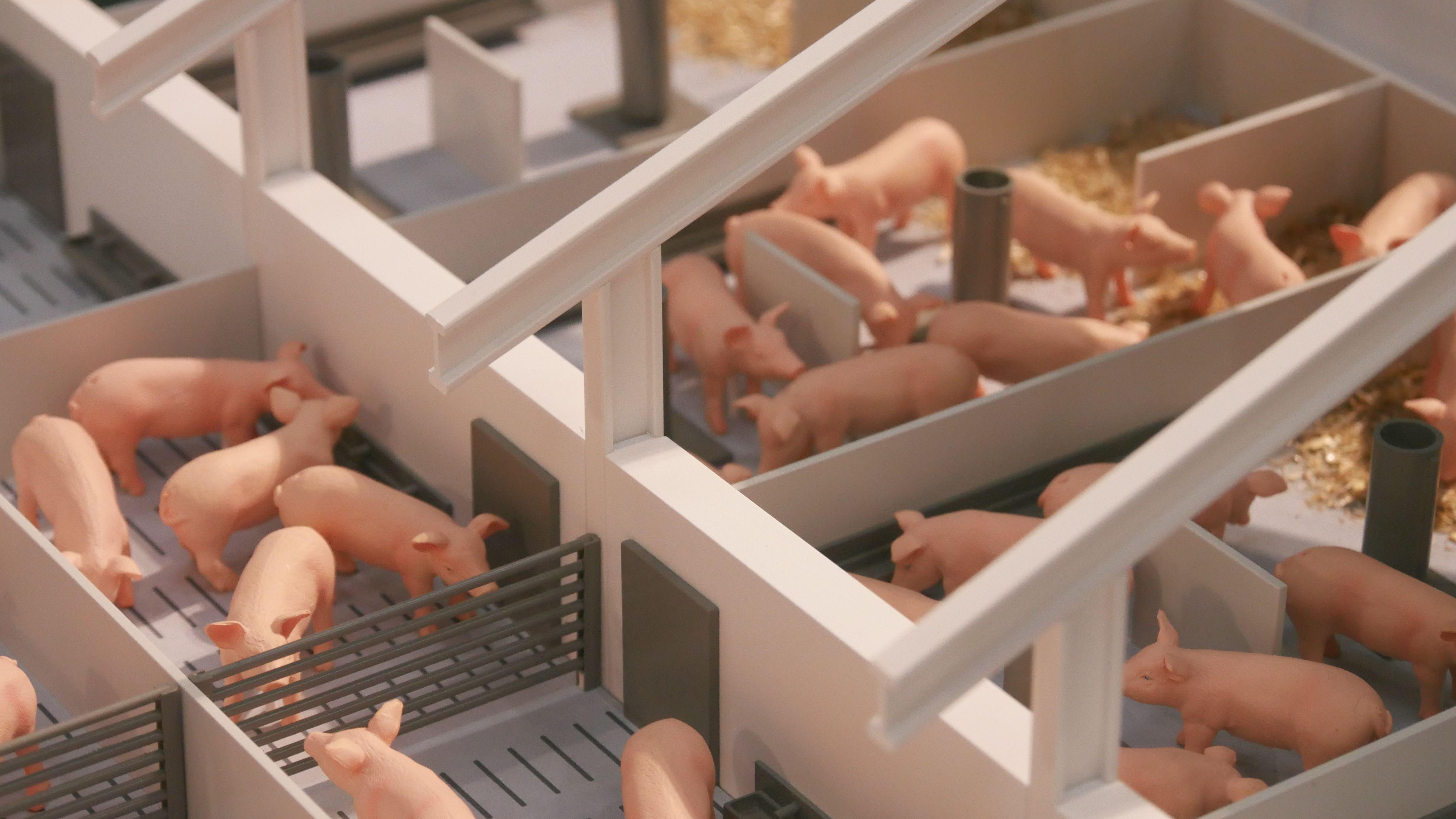 Stall der Zukunft: Modelle mit Stroh und Ringelschwanz