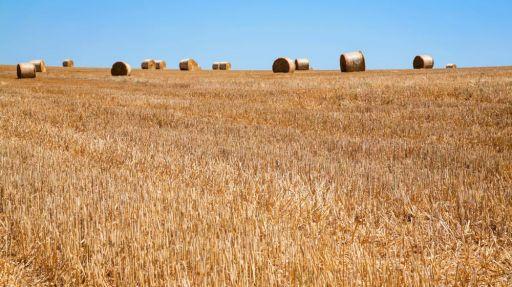 Weizen Frankreich