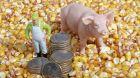 Schwein Mais Geld Euro