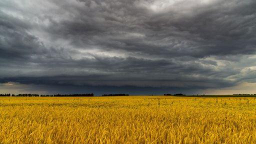 Weizen feld wolken