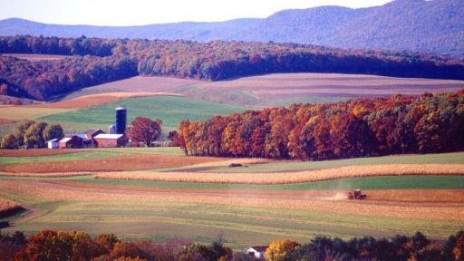 Maisernte Pennsylvania USA